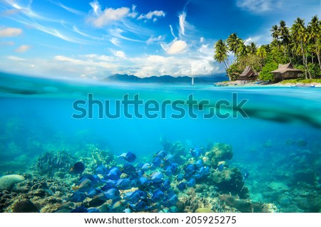 Coral reef, colorful fish and sunny sky shining through clean ocean water.. Summer holiday concept. Coral reef, colorful fish and sunny sky shining through clean ocean water.High res - stock photo