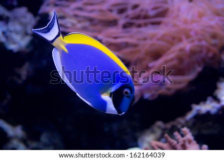 coral reef fish in the water - stock photo