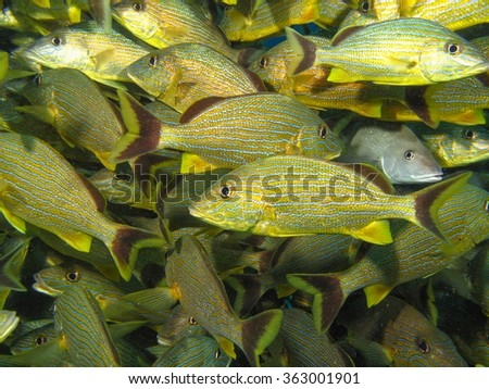 Coral reef Fishes under water in coral reef patch - stock photo