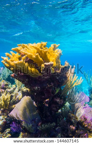 coral reef from the caribbean. - stock photo
