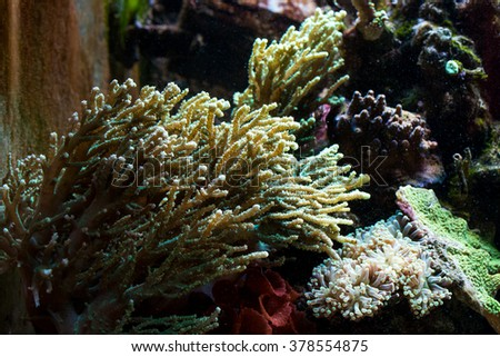 Coral Reef in aquarium