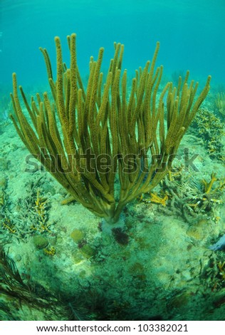 coral reef in Atlantic ocean with marine life - stock photo