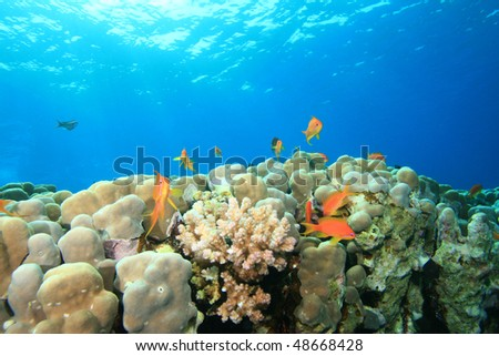 Coral Reef in blue water