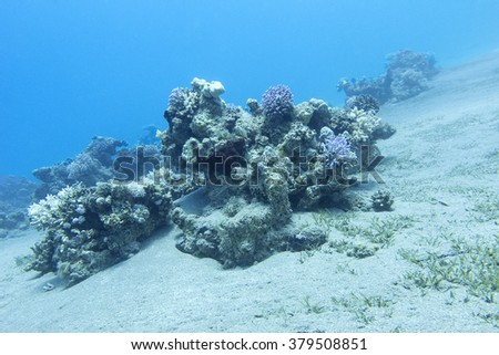 coral reef in deep water at the bottom of tropical sea, underwater. - stock photo