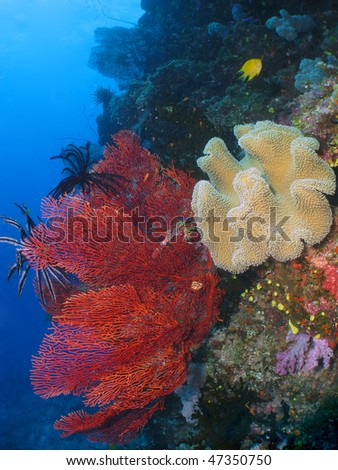 Coral reef in Fiji barrier, (coral colony) - stock photo