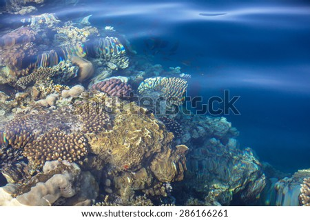 Coral reef in Red Sea, Egypt - stock photo