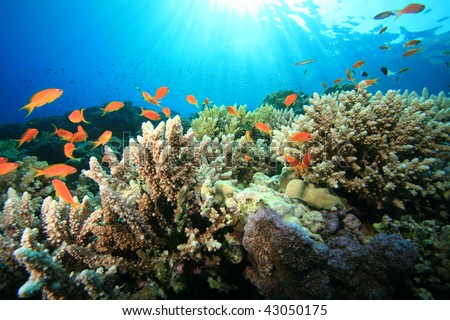 Coral Reef in Sunlight