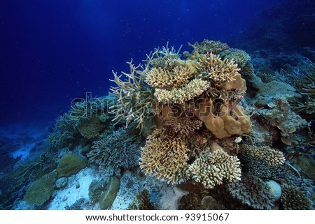 Coral reef in the indian ocean - stock photo