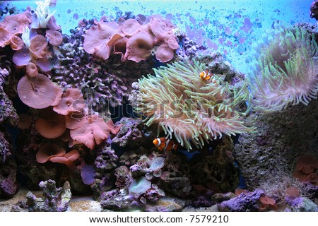 Coral Reef in tropical water - stock photo