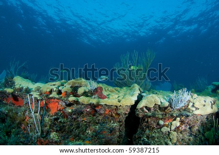 Coral Reef Ledge Composition, picture taken in Broward County, Florida. - stock photo