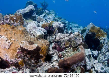 Coral reef near St. Barts known as the whale's tail had many different varieties of corals and fish. - stock photo