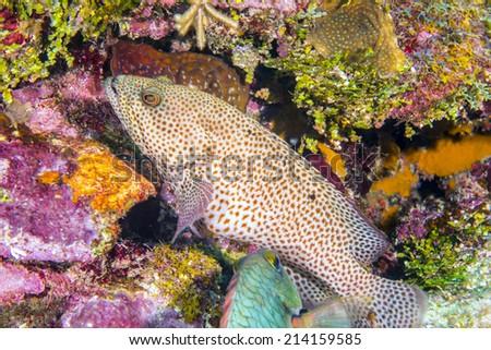Coral reef  off coast of Roatan Honduras - stock photo