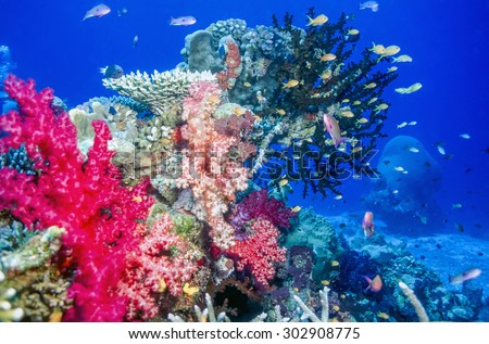 Coral reef off the coast of Fiji island of Taveuni with soft corals - stock photo