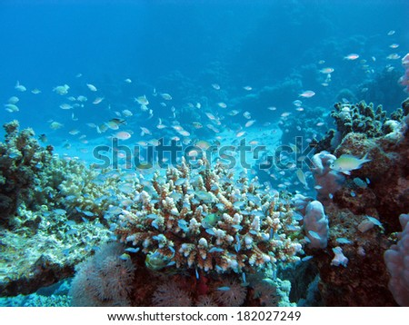 coral reef on tke seabed at great depth on a background of blue water - stock photo