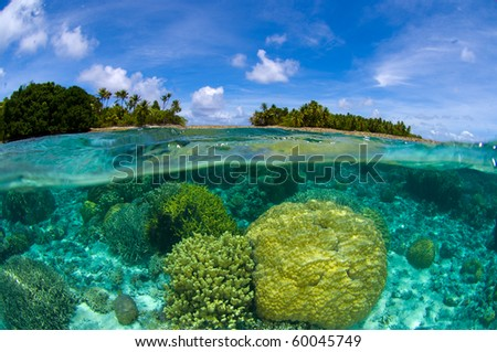 Coral reef over/under at the Marshall Islands - stock photo