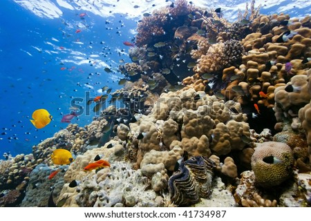 Coral reef scene - stock photo