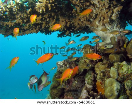 Coral Reef Scene with fish - stock photo