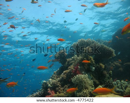 Coral Reef Scene with many fish - stock photo