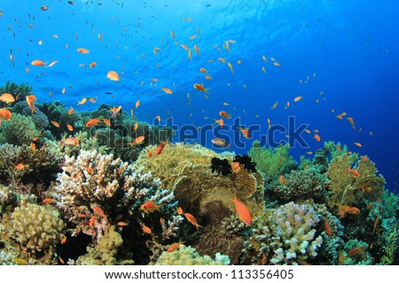 Coral Reef Scene with tropical fish in Red Sea, Egypt - stock photo