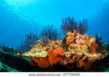 Coral reef scenics of the Sea of Cortez. Cabo Pulmo National Park, Baja California Sur, Mexico.  The world's aquarium. - stock photo