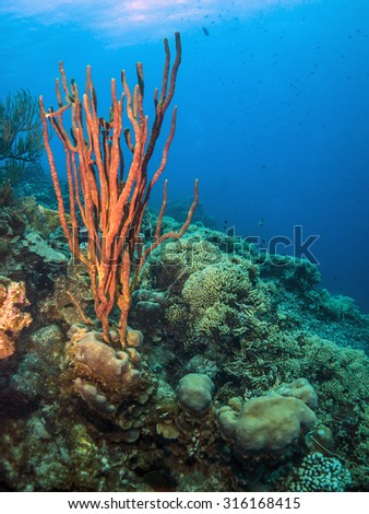 Coral reef slooping wall underwater off the coast of Bonaire - stock photo