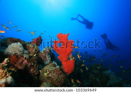 Coral Reef, Sponges and Scuba Divers in the Red Sea - stock photo
