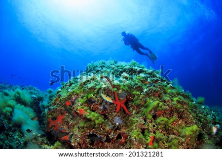 Coral Reef Starfish and Scuba diver in Mediterranean Sea
