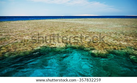 Coral reef under blue water in Red Sea