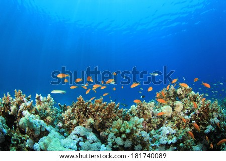 Coral Reef Underwater in Ocean - stock photo