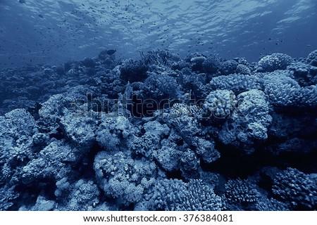 coral reef underwater photo - stock photo