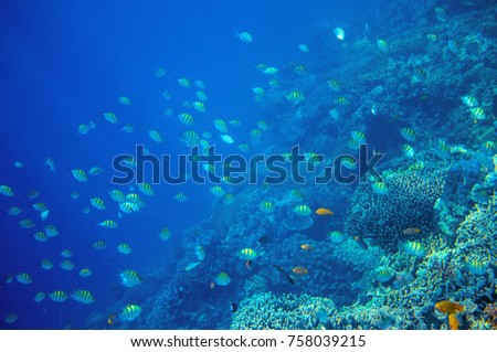 Coral reef wall with tropical fish. Undersea landscape. Fauna and flora of tropical shore. Coral reef underwater photo. Snorkeling in tropics. Exotic island seaside vacation. Aquarium banner template