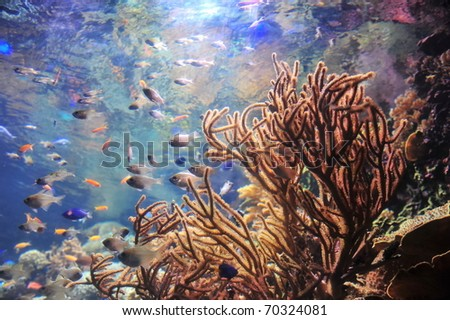 Coral reef with colorful fishes