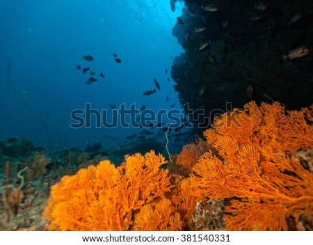 Coral reef with detail of soft corals and exotic fish on bottom of Indian ocean, Maldives. - stock photo