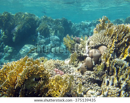 coral reef with fire corals at the bottom of tropical sea on a background of blue water, underwater - stock photo