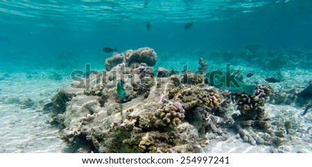 Coral reef with fish - stock photo