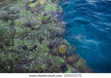 Coral reef with fish and corals in te sea - stock photo