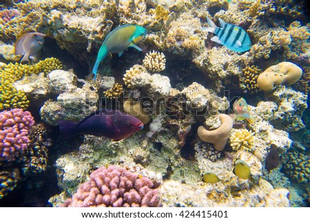 coral reef with fish in red sea near egypt