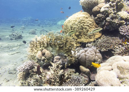 coral reef with hard corals and exotic fishes  in tropical sea, underwater - stock photo