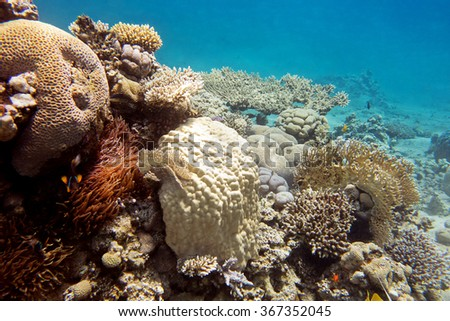 coral reef with hard corals at the bottom of tropical sea, underwater - stock photo