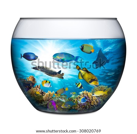 coral reef with marine animals in fishbowl - stock photo
