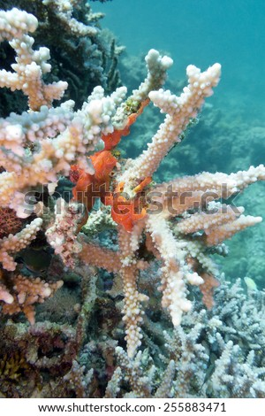 coral reef with sea sponge at the bottom of tropical sea on blue water background - stock photo