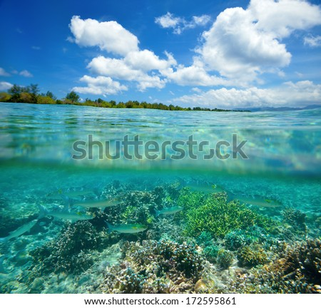 Coral reef with shoal of fish floating in the tropical sea. Indonesia - stock photo