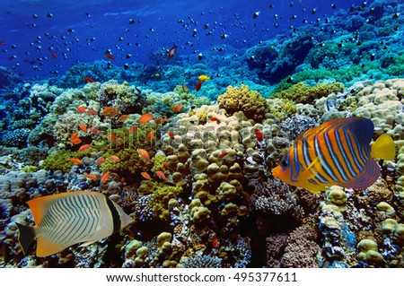 Coral reef with soft and hard corals. Red Sea. Egypt.