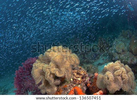 Coral Reef with Sparkling Glass fish