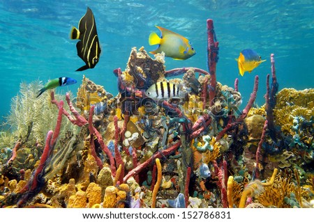 Coral reef with vivid colors of underwater marine life - stock photo