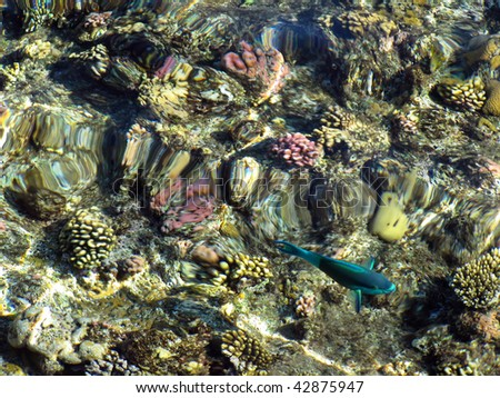 Coral reefs in Sharm El Sheikh, Egypt - stock photo