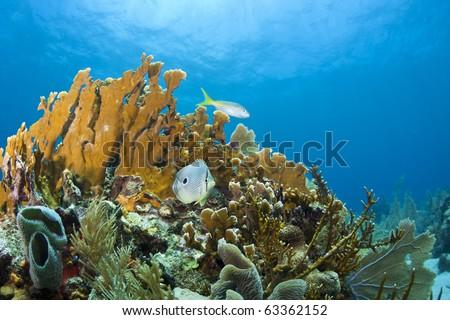 Coral reefs off the coast of Roatan,Honduras - stock photo