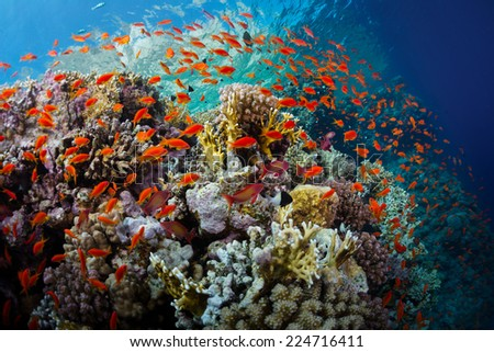 Coral reefs with tiny fish in the Ras Muhammad National Park. Egypt - stock photo