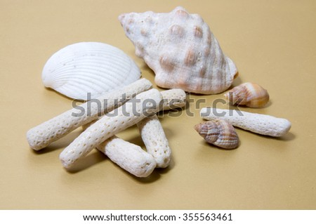 Coral Rubble formed from old dead coral that is washed up onto the beach with some shells on light brown background. - stock photo