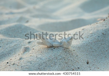 Coral Rubble formed from old dead corals that is washed up onto the beach - stock photo